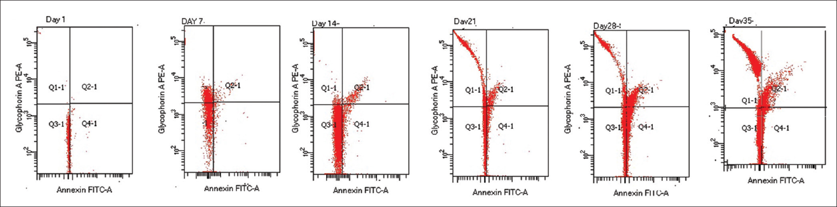 Figure 3: Flow cytometry experiment. The above figure shows example of one of the samples analyzed by flow cytometry through the storage duration 35 days. The dual expression of the annexin V and glycophorin A microparticles in quadrant Q2-displayed in biexponential scale